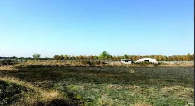 """莱芜""""十大民生工程之一""""湿地公园新进展!城发集团开始清理杂草!"""
